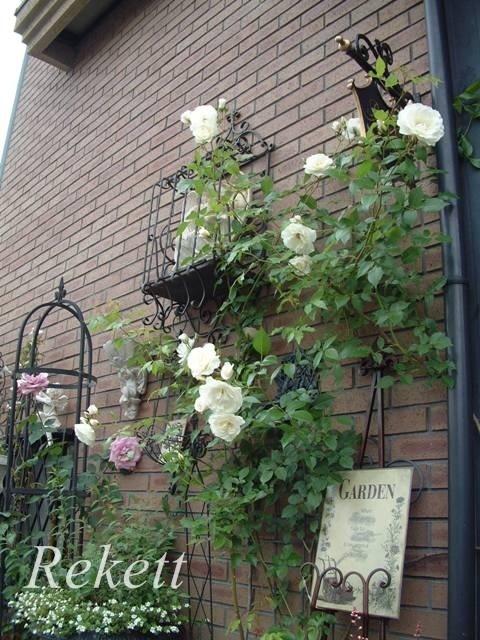 バラの季節ですね~♪_f0029571_00034694.jpg
