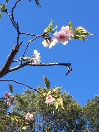 春過ぎて・・_d0113879_10302610.jpg