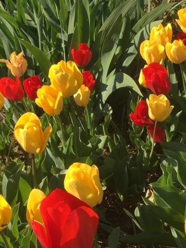 春過ぎて・・_d0113879_10303136.jpg