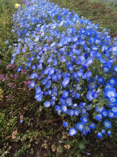 春過ぎて・・_d0113879_10303963.jpg