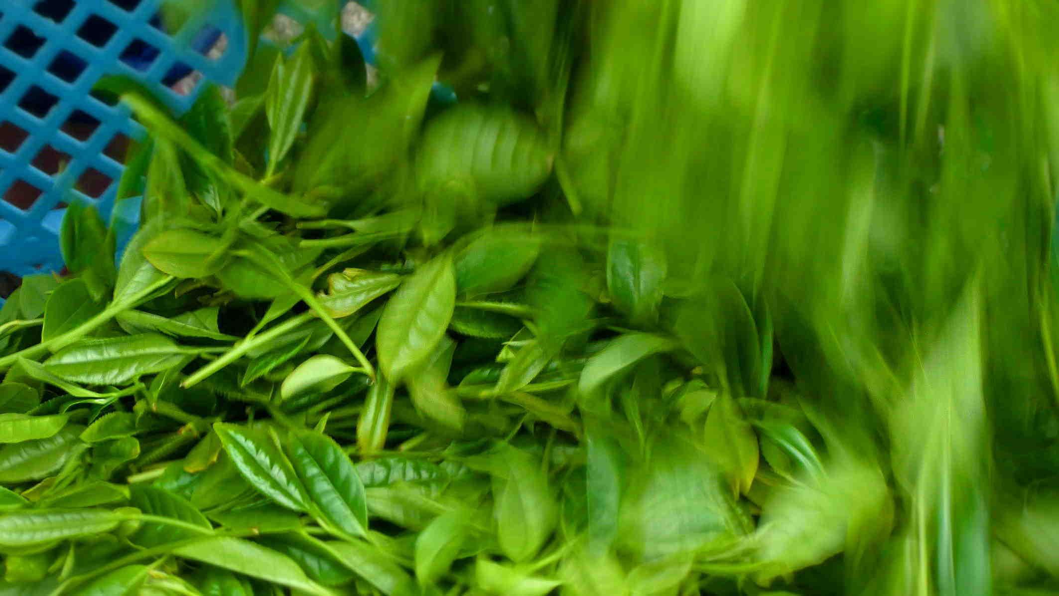 お茶の伝統 人間の絆に新しい想いを織り込んでいく   Tea tradition Add new feelings to the deep bond between humans. _a0391480_19531639.jpg