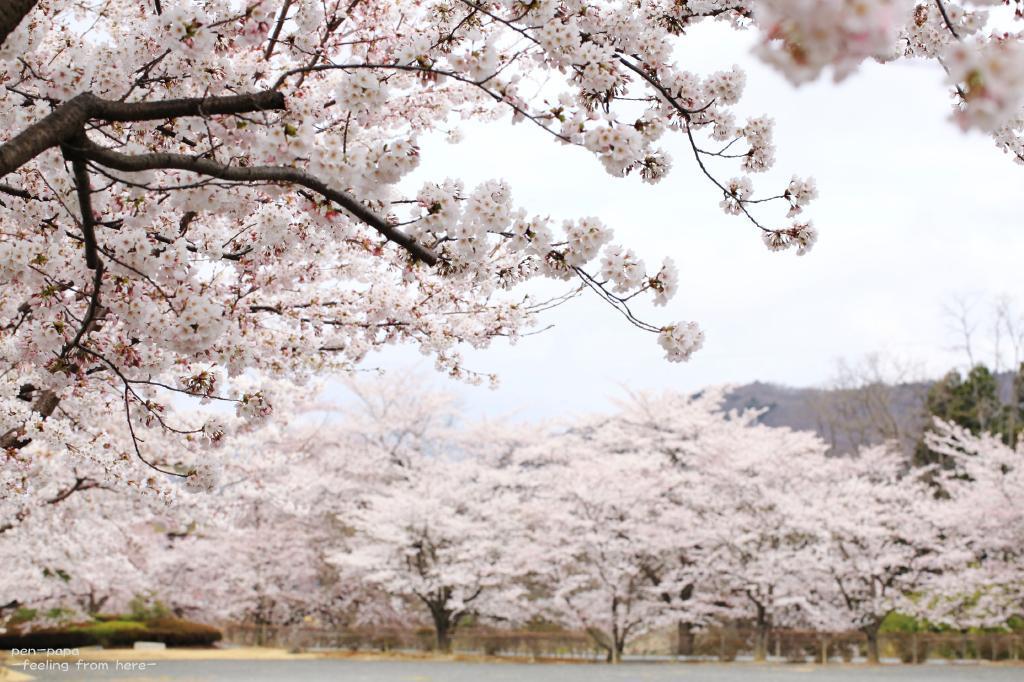 思いは来春へ_c0356480_20200165.jpg