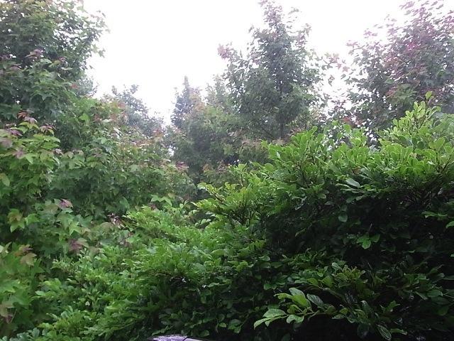 梅雨入り_e0158687_10272454.jpg