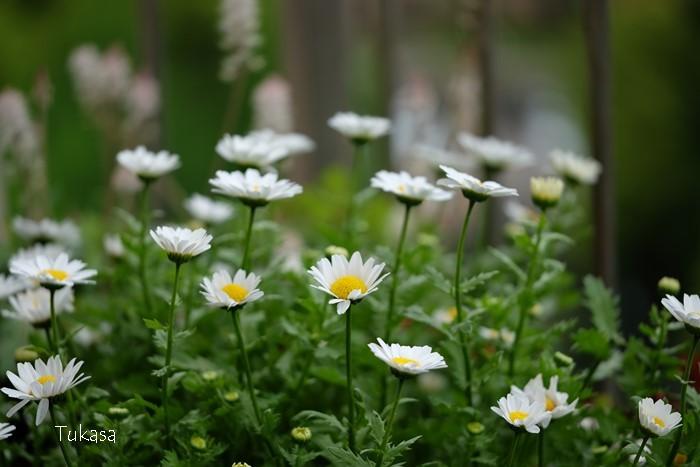 五月の花々_e0040092_16535556.jpg