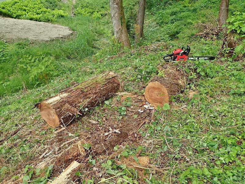 兼業農家は山へ柴刈りに行きました!_c0336902_20332844.jpg