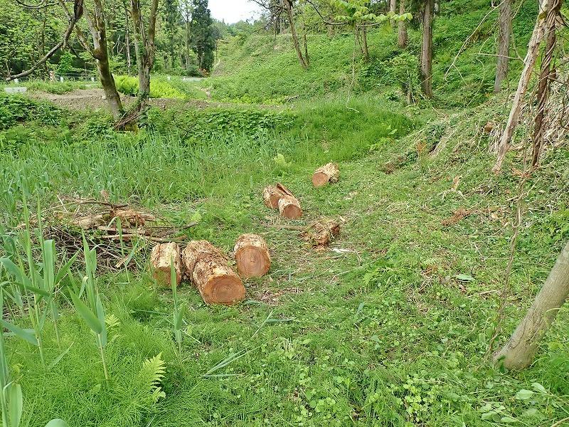 兼業農家は山へ柴刈りに行きました!_c0336902_20334532.jpg