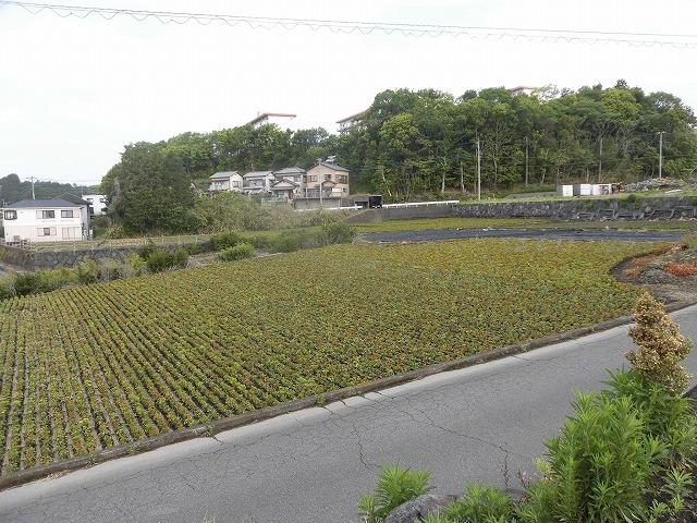 刈り取り間近の茶畑を行く  こどもの日に歩いた朝の散歩「総合運動公園コース」_f0141310_07370059.jpg