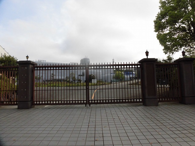 刈り取り間近の茶畑を行く  こどもの日に歩いた朝の散歩「総合運動公園コース」_f0141310_07374940.jpg