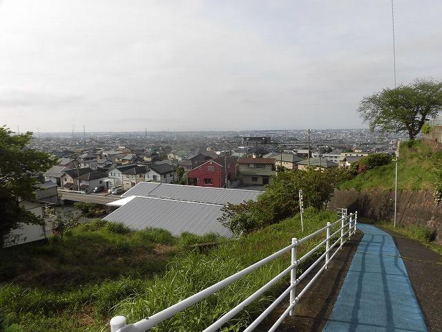 刈り取り間近の茶畑を行く  こどもの日に歩いた朝の散歩「総合運動公園コース」_f0141310_07384882.jpg