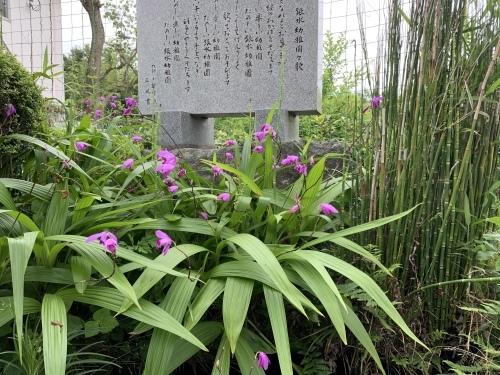 幼稚園のお庭_c0107515_10053815.jpeg