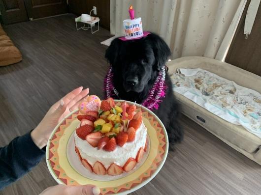 Happy birthday Sophie❤️_f0077931_19201268.jpeg