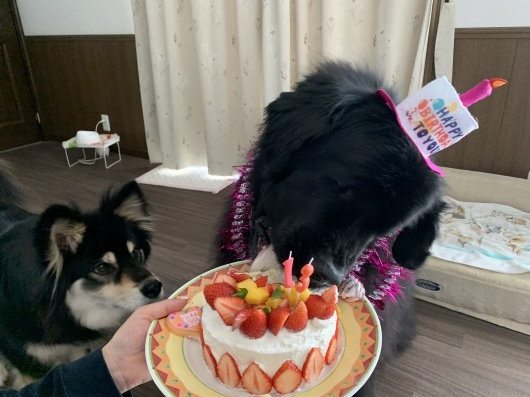 Happy birthday Sophie❤️_f0077931_19203211.jpeg