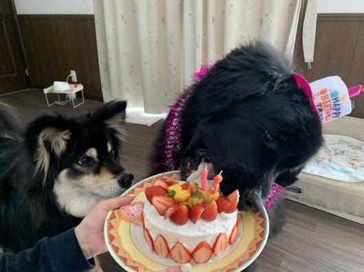 Happy birthday Sophie❤️_f0077931_19205011.jpeg