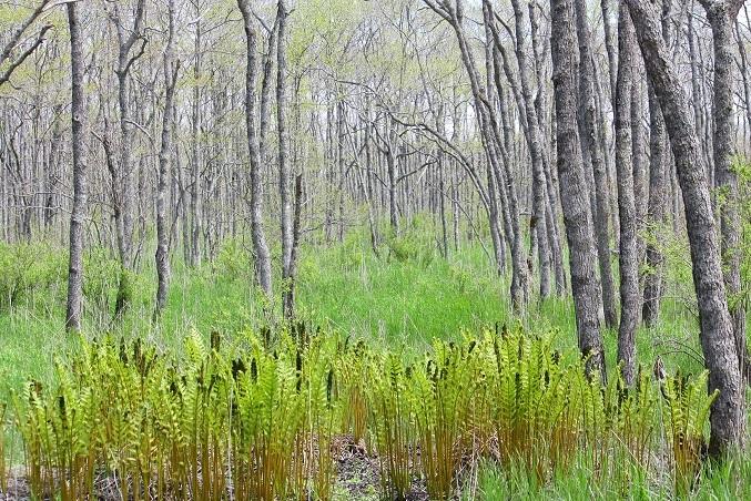 新緑があざやかな季節です 5月13日_f0113639_15240551.jpg