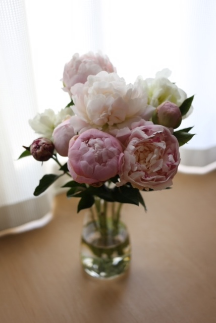 pinkの癒し_c0342646_09054589.jpeg
