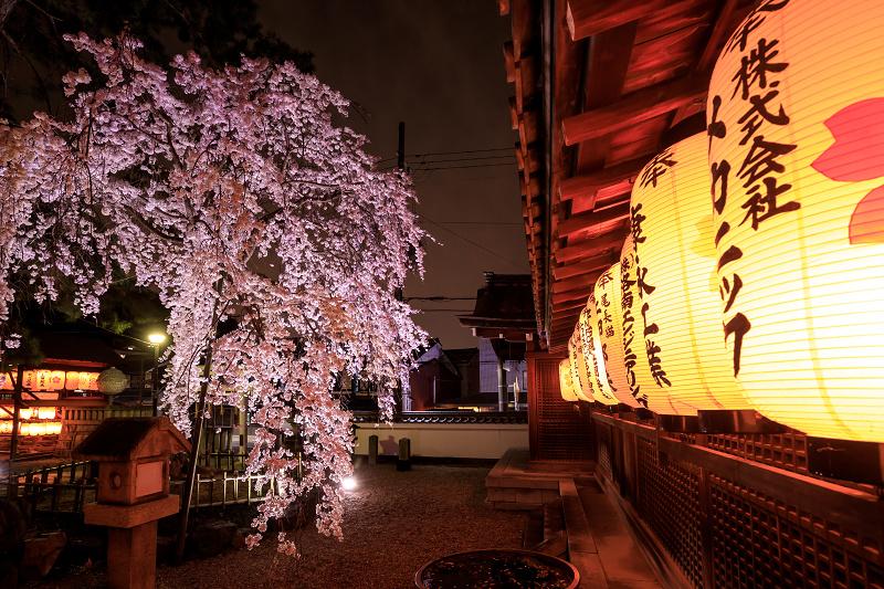2020桜咲く京都 木花桜ライトアップ(縣神社)_f0155048_23303713.jpg