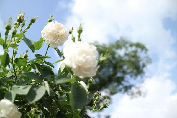 ホワイトの美の力_e0219353_12044198.jpg