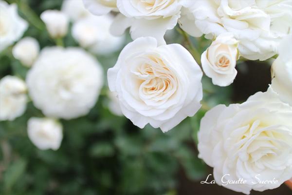 ホワイトの美の力_e0219353_12243167.jpg