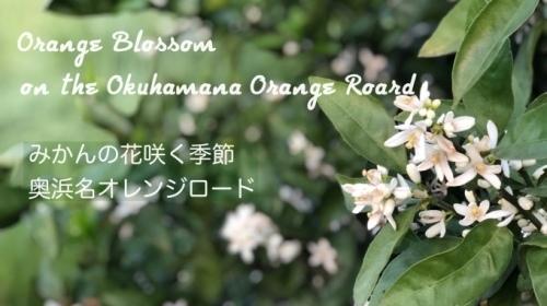 動画「みかんの花咲く季節 奥浜名オレンジロード」のご紹介_e0040957_16525024.jpg