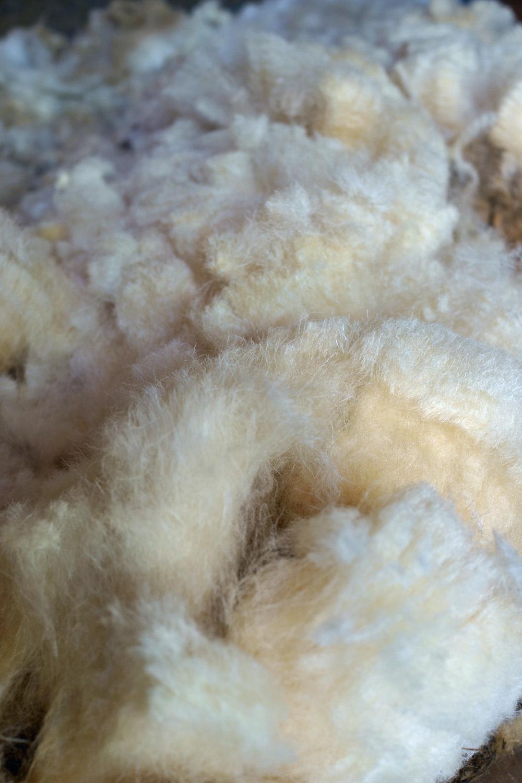 羊の毛刈り_d0231263_22582630.jpg
