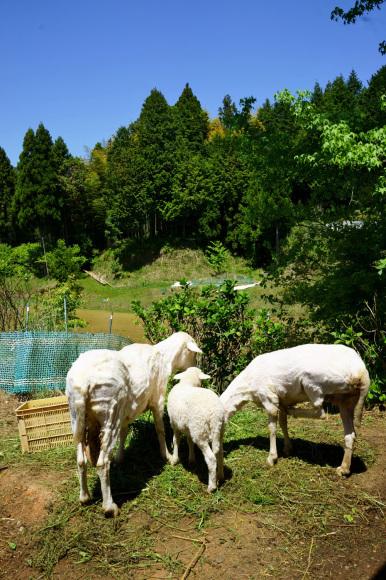羊の毛刈り_d0231263_22583765.jpg