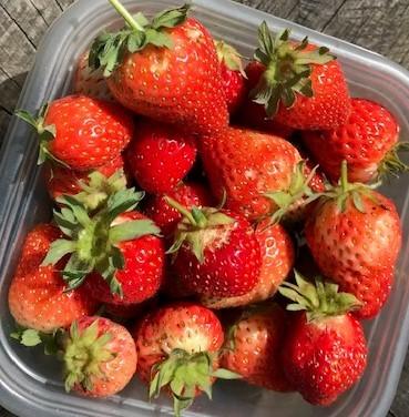 六国見山産の甘いイチゴ、遂に孫たちの口に5・13_c0014967_17591136.jpg