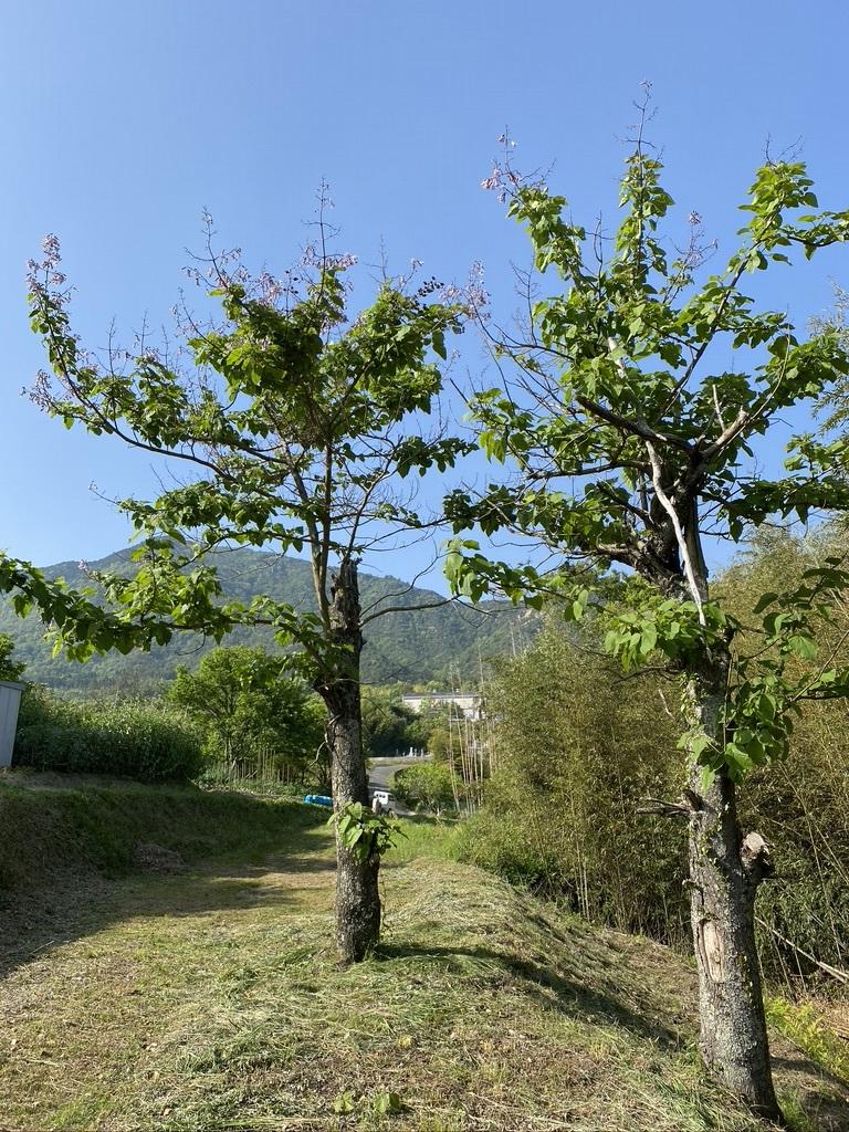 裏山散策 〜ツツジの他に見たもの〜_c0334574_19404011.jpeg
