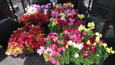 (公社)名古屋清港会さんに花鉢の販売を行いました!R2.5.12_d0338682_16562562.jpg