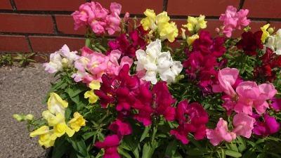 (公社)名古屋清港会さんに花鉢の販売を行いました!R2.5.12_d0338682_16595482.jpg