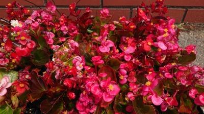 (公社)名古屋清港会さんに花鉢の販売を行いました!R2.5.12_d0338682_17001601.jpg