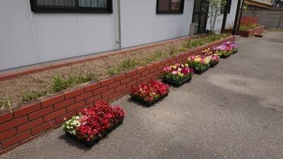 (公社)名古屋清港会さんに花鉢の販売を行いました!R2.5.12_d0338682_17012998.jpg