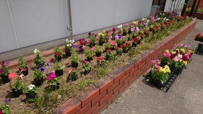(公社)名古屋清港会さんに花鉢の販売を行いました!R2.5.12_d0338682_17014587.jpg