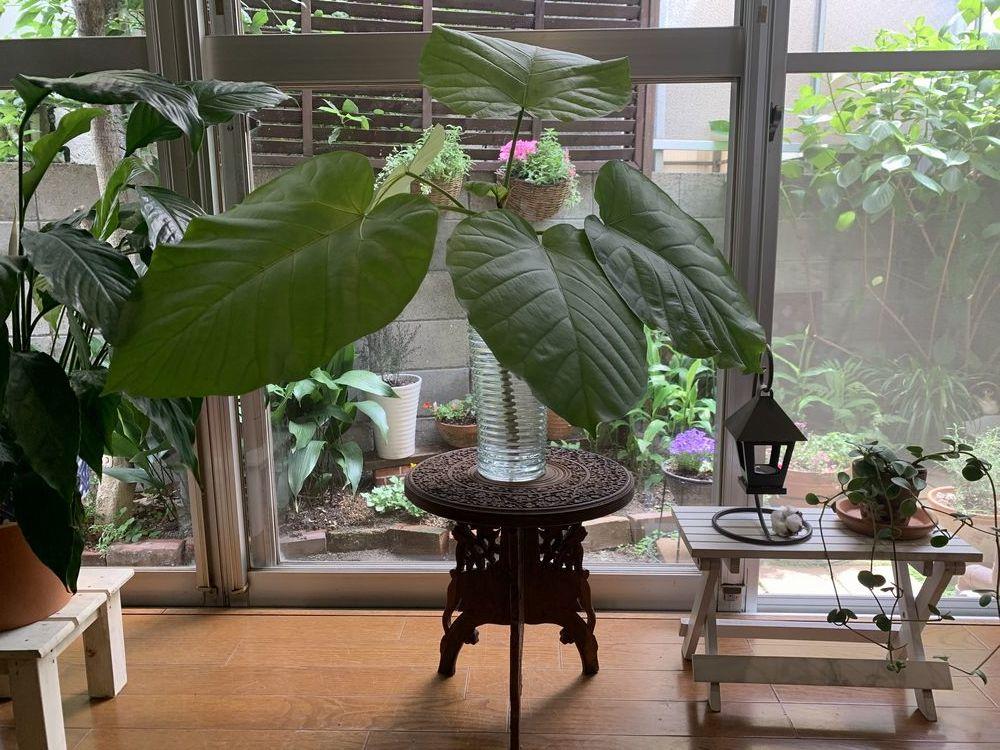我が家のグリーン計画_a0267202_16374001.jpg