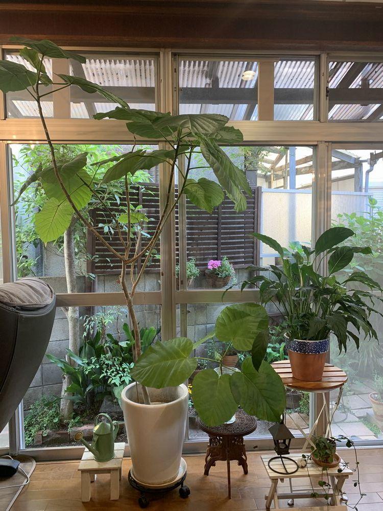 我が家のグリーン計画_a0267202_16445484.jpg