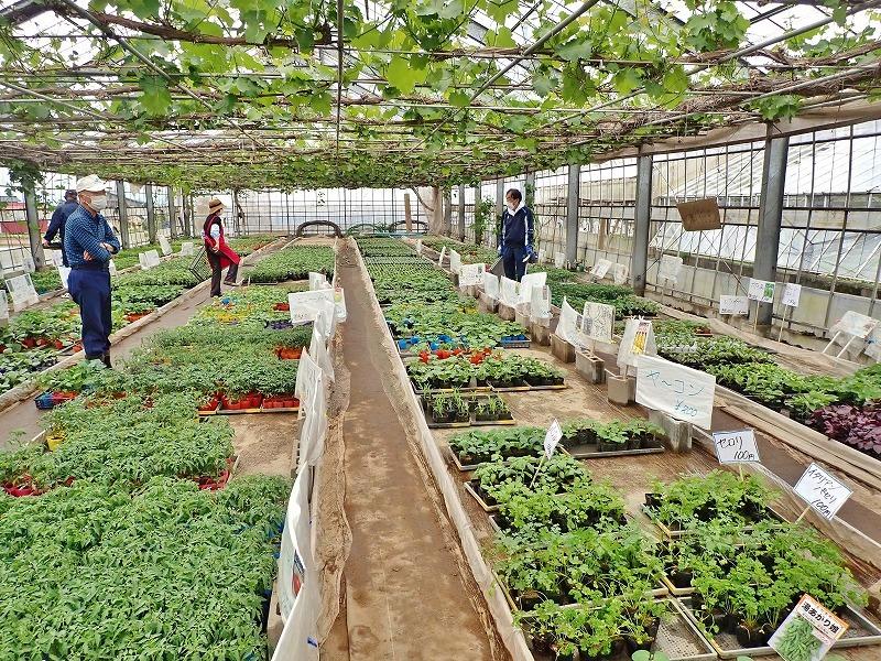 兼業農家は家庭菜園の苗を購入し定植をしました_c0336902_20031348.jpg