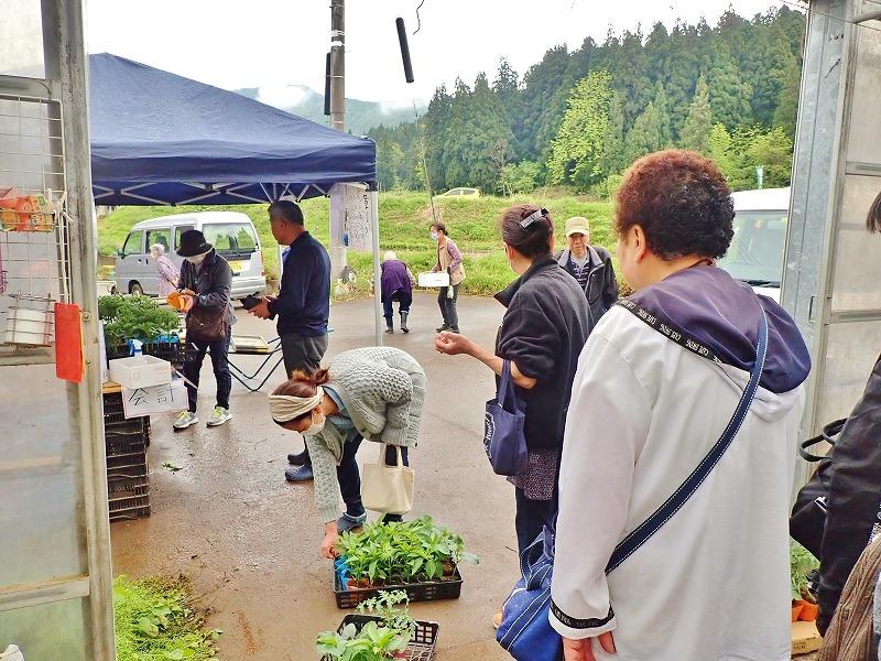 兼業農家は家庭菜園の苗を購入し定植をしました_c0336902_20031714.jpg