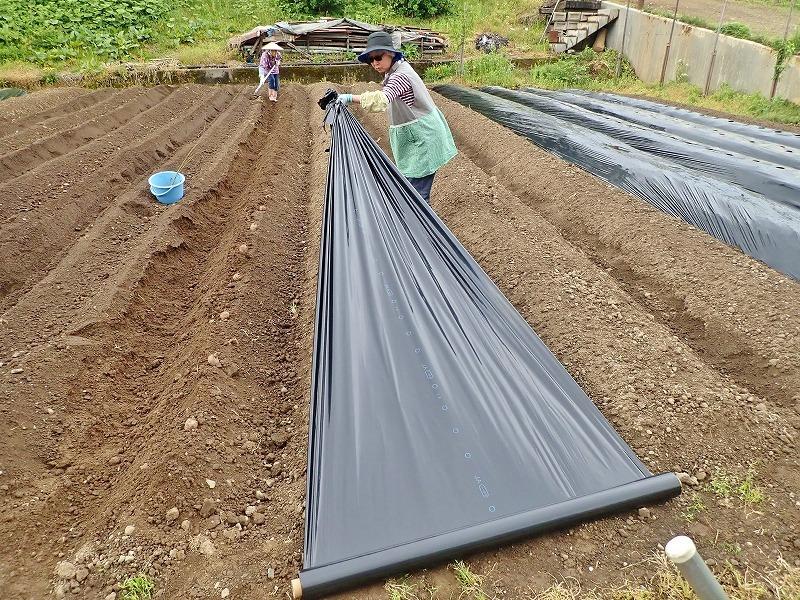 兼業農家は家庭菜園の苗を購入し定植をしました_c0336902_20032594.jpg