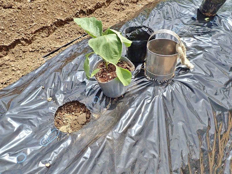 兼業農家は家庭菜園の苗を購入し定植をしました_c0336902_20033394.jpg