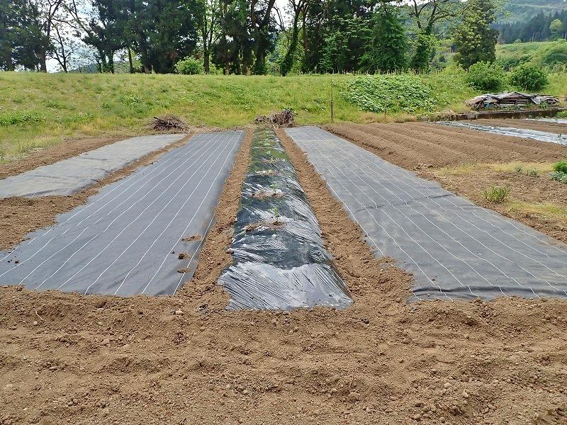 兼業農家は家庭菜園の苗を購入し定植をしました_c0336902_20034812.jpg