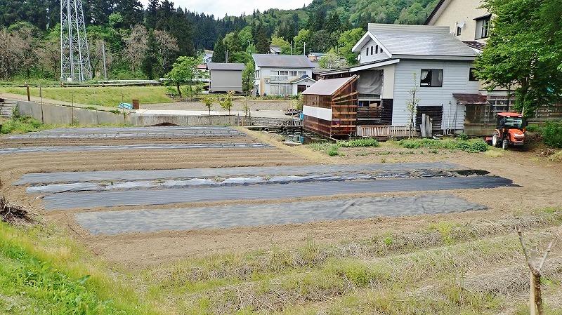 兼業農家は家庭菜園の苗を購入し定植をしました_c0336902_20035129.jpg