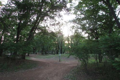 夕方の散歩_a0333211_22101392.jpg