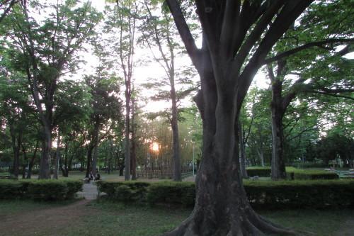 夕方の散歩_a0333211_22102742.jpg