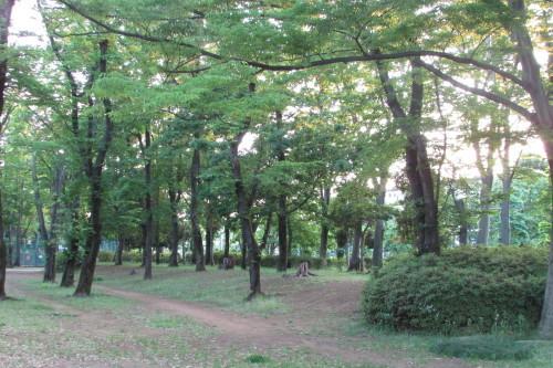夕方の散歩_a0333211_22103987.jpg