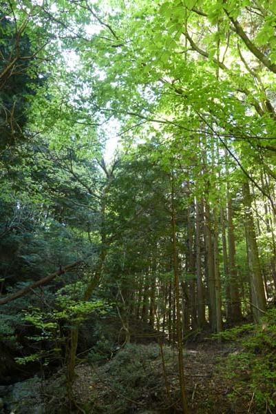 新緑の北山 百井から大見へ_e0048413_22074220.jpg