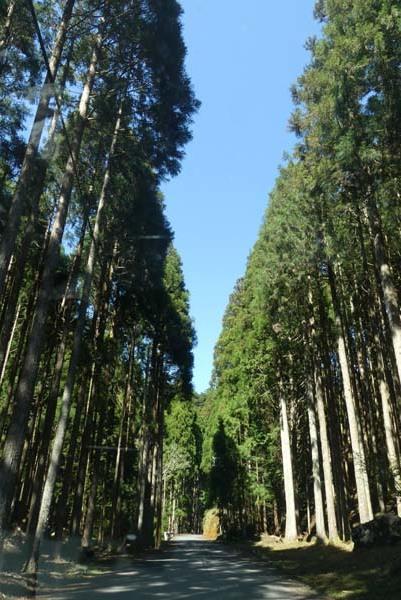 新緑の北山 百井から大見へ_e0048413_22080829.jpg