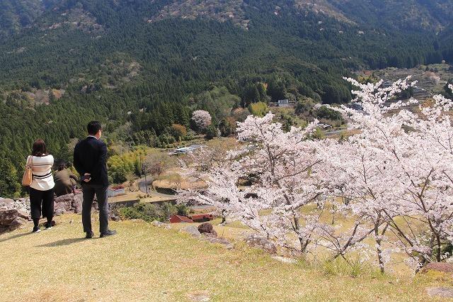 赤木城跡の桜満開(その2)(撮影:4月7日)_e0321325_13210682.jpg
