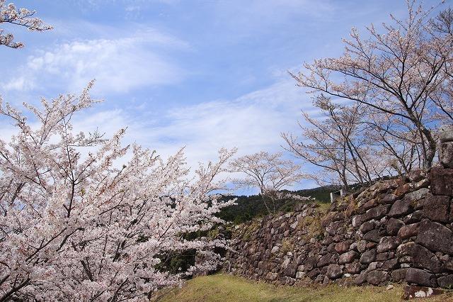 赤木城跡の桜満開(その2)(撮影:4月7日)_e0321325_13233791.jpg