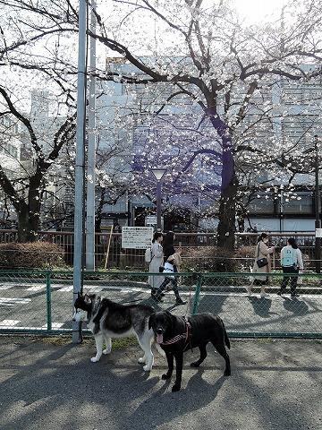 散歩屋日誌【42】_c0062832_17392556.jpg