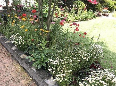 2020 小さな庭の花たちその2_b0063438_11105996.jpg