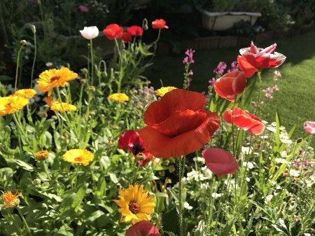 2020年春 小さな庭の花たちその1_b0063438_11345058.jpg
